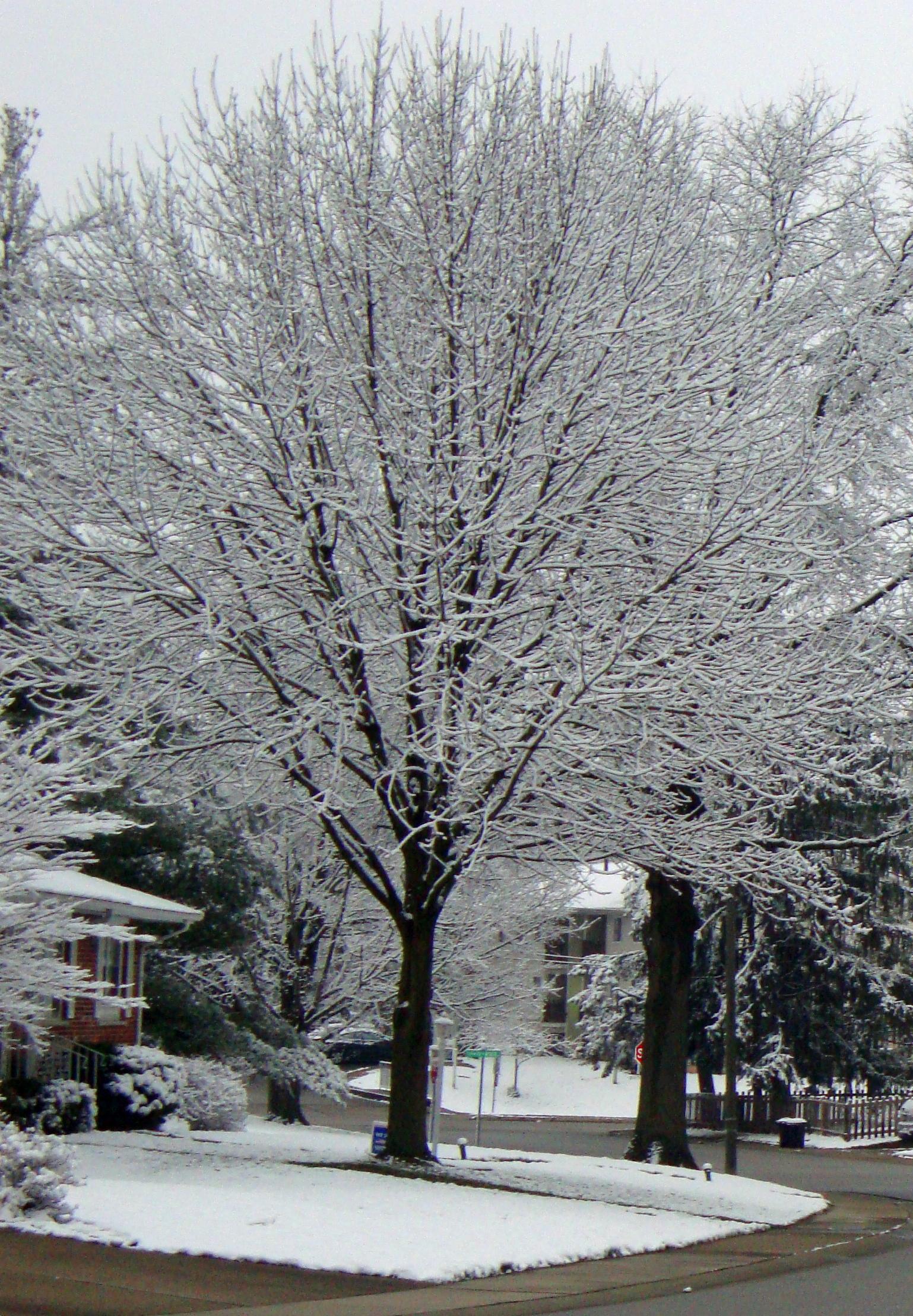 03 tree
