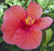10 Flower 1a