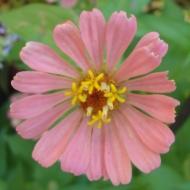 10 Flower 2a