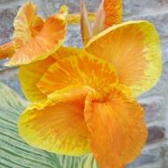 10 Flower 3a