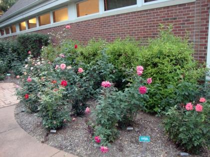 14 Rose Garden1