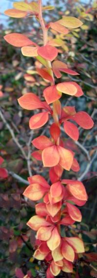 Multicolor bush